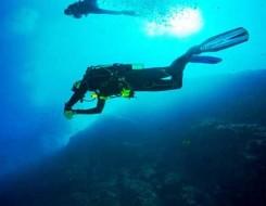 مصر اليوم - حديقة كوجوكوشيما المائية تعلن عن أخطبوط بـ36 ذراعا بدلا من 8 في اليابان