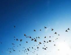 مصر اليوم - أخطر 3 حشرات في العالم منها ملك العناكب جالوت آكل الطيور