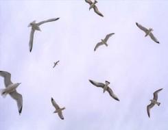 مصر اليوم - دراسة تكشف تغيرات في سلوك الطيور بسبب كورونا