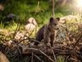 مصر اليوم - علماء ألمان يستعينون بحيوان «الألباكا» لمحاربة كورونا