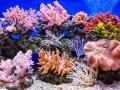 مصر اليوم - مساحة الشعاب المرجانية تنكمش بنسبة 50% منذ خمسينيات القرن الماضي