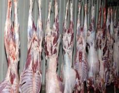 مصر اليوم - إعدام ماشية مصابة بمرض نادر ينتقل إلى الإنسان والجزارون يعترضون في مصر