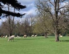 مصر اليوم - مزرعة أبقار فريدة من نوعها عائمة فوق الماء في روتردام الهولندية بغية حماية المناخ