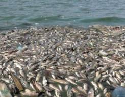 مصر اليوم - القانون يحظر إلقاء المواد السامة والمشعة ونفايات السفن في المياه