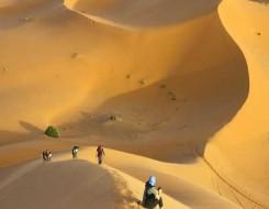 مصر اليوم - منطقة الجوف السعودية يُعتقد أنها أقدم موقع لنحت الحيوانات في العالم