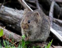 مصر اليوم - اكتشاف نوع جديد من الفئران عاش في مصر قبل 34 مليون سنة