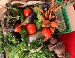 مصر اليوم - أطعمة خاصة للرجال  فوق سن الأربعين