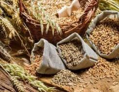 مصر اليوم - الحكومة المصرية تنفي وجود أزمة في توفير القمح بمختلف محافظات الجمهورية